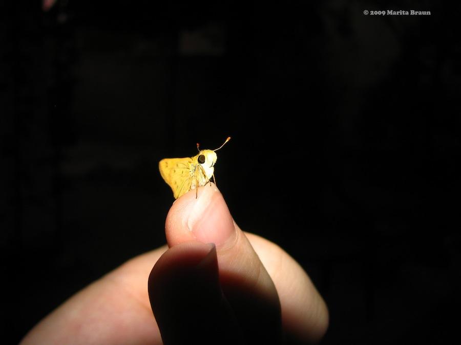 moth on finger